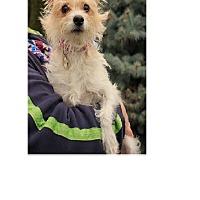 Adopt A Pet :: Ginger - Seattle, WA