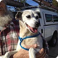 Adopt A Pet :: Joan - Slidell, LA