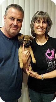 Dachshund Mix Puppy for adoption in Sacramento, California - Crescendo