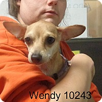 Adopt A Pet :: Wendy - Greencastle, NC