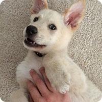 Adopt A Pet :: Rocky - Flower Mound, TX
