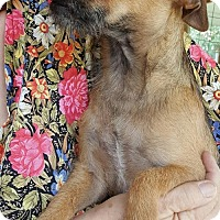 Adopt A Pet :: Bailey - Baileyton, AL