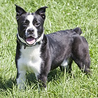 Adopt A Pet :: Gabe - Bedford, IN