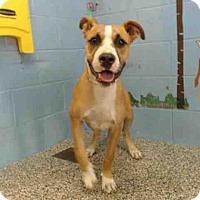 Adopt A Pet :: URGENT on 7/19 SAN BERNARDINO - San Bernardino, CA
