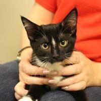 Adopt A Pet :: Mozzarella - Brunswick, GA