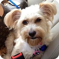 Adopt A Pet :: LIbby - Fairfax, VA