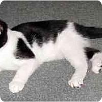 Adopt A Pet :: Tillie - Alexandria, VA