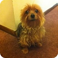 Adopt A Pet :: Avalon - North Benton, OH