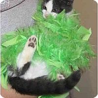 Adopt A Pet :: Ringo - Catasauqua, PA
