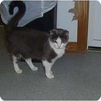 Adopt A Pet :: Chubby - Hamburg, NY