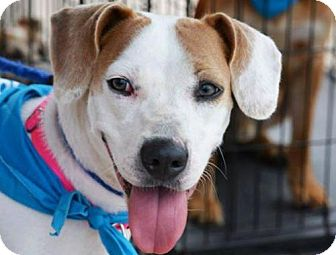Hound (Unknown Type) Mix Dog for adoption in Blakeslee, Pennsylvania - Shannon