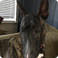 Adopt A Pet :: Penelope - Houston, TX