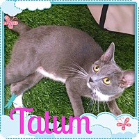 Adopt A Pet :: Tatum - Maryville, TN