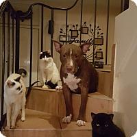 Adopt A Pet :: Fjodor - HIALEAH, FL
