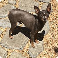 Adopt A Pet :: Zayn - Davie, FL