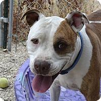 Adopt A Pet :: Romeo - Meridian, ID