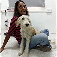 Adopt A Pet :: Nizwa - Alexandria, VA