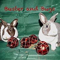 Adopt A Pet :: Buster - Elizabethtown, KY