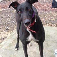 Adopt A Pet :: CP's King Henrik - Gerrardstown, WV