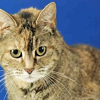 Adopt A Pet :: RUTH - Fort Collins, CO