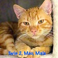 Adopt A Pet :: Twin 2 - York, PA