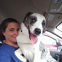 Adopt A Pet :: Ashe - Peyton, CO