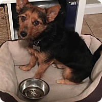 Adopt A Pet :: Briscoe (Courtesy Post) - Tallahassee, FL