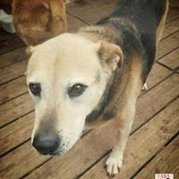 Adopt A Pet :: Magill - Killeen, TX