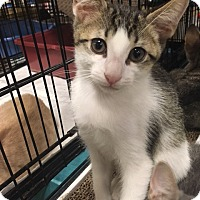 Adopt A Pet :: Mike - Boynton Beach, FL