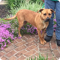 Adopt A Pet :: 49110 Bella Donna sponsored $72 plus tags - Zanesville, OH