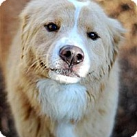 Adopt A Pet :: Daley - New Boston, NH