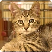 Adopt A Pet :: Josh - Jenkintown, PA