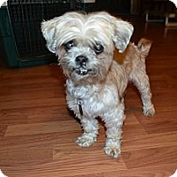 Adopt A Pet :: Lulu - Hagerstown, MD