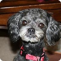 Adopt A Pet :: Morty - Commerce City, CO