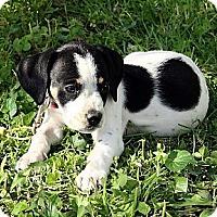 Adopt A Pet :: Emmett - Staunton, VA