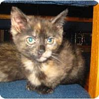 Adopt A Pet :: Gizell - Syracuse, NY