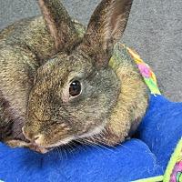 Adopt A Pet :: Gidget - Newport, DE