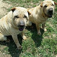 Adopt A Pet :: Janet - London, KY