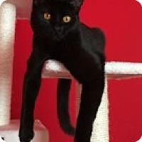 Adopt A Pet :: Jack - McHenry, IL