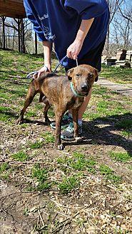Terrier (Unknown Type, Medium) Mix Dog for adoption in Jackson, Missouri - Jillian