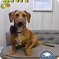 Adopt A Pet :: Kiwi - Arcadia, FL