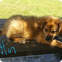 Adopt A Pet :: Caitlin - Sussex, NJ