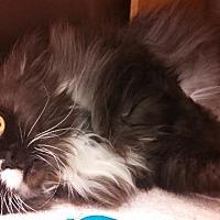 Adopt A Pet :: Sadie AKA Marge - Tucson, AZ