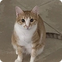 Adopt A Pet :: Missy - Pearland, TX