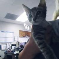 Adopt A Pet :: Zelda - Fresno CA, CA