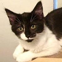 Adopt A Pet :: Betty Boop - Davis, CA