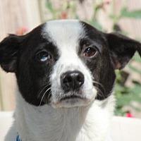 Adopt A Pet :: Reuben - Locust Fork, AL
