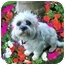 Photo 3 - Lhasa Apso/Bichon Frise Mix Dog for adoption in Los Angeles, California - NOELLE
