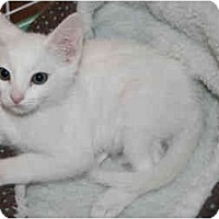 Adopt A Pet :: Bianca - Modesto, CA