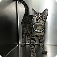 Adopt A Pet :: Opal - Farmingdale, NY